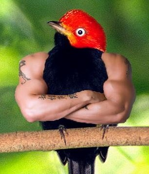 birds-with-arms-08