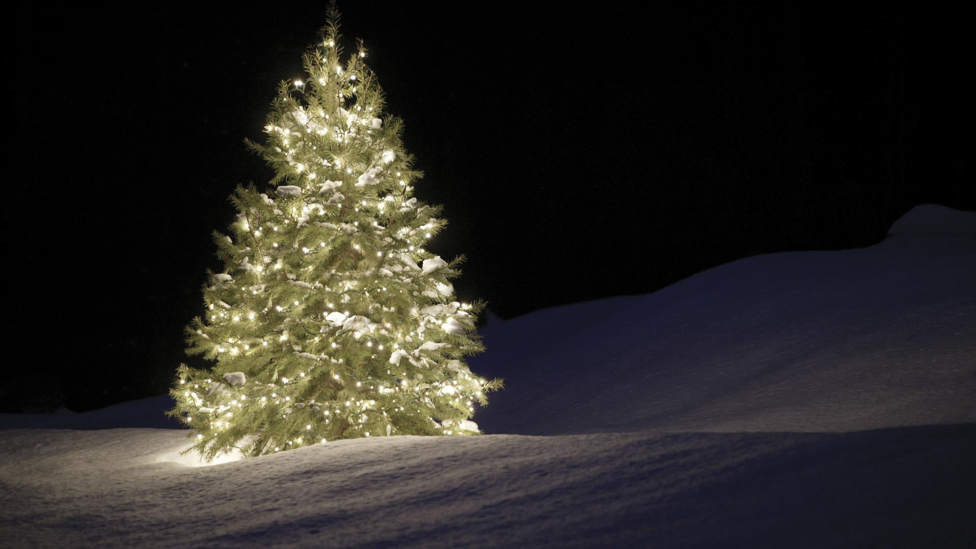 Black Christmas Tree With Lights