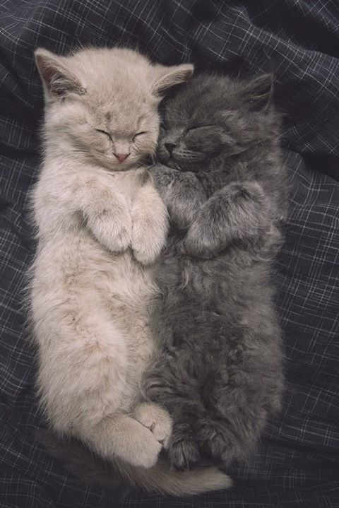 cute-kittens-sleeping