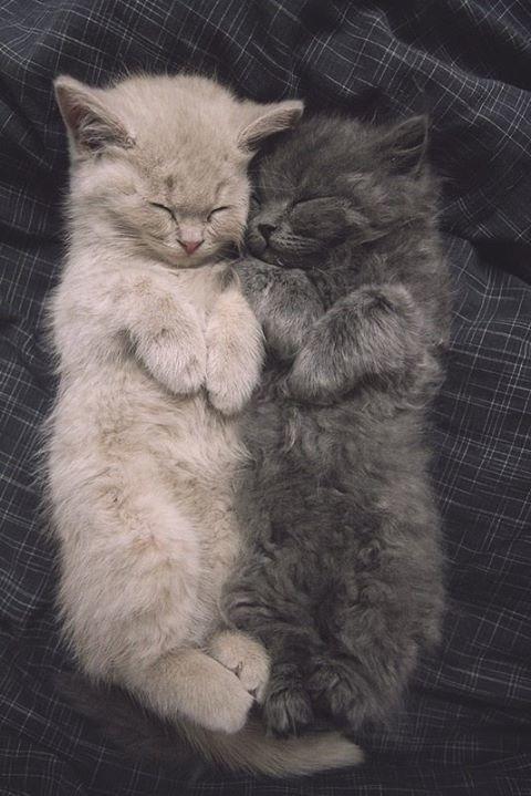 cute-kittens-sleeping