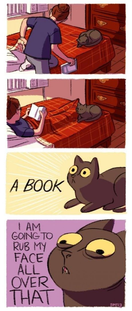 Cats + Books/iPads = This