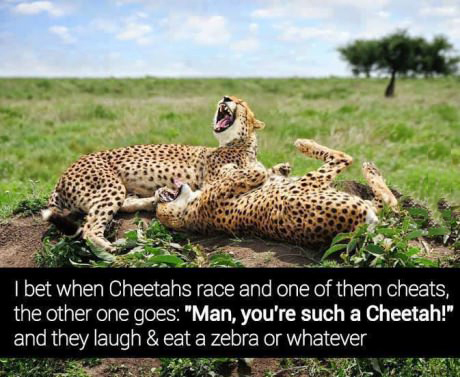 Cheetah joke
