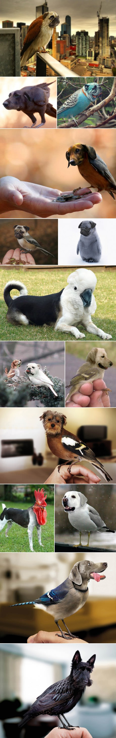 After Birds with Arms why not Dog/Bird Hybrids