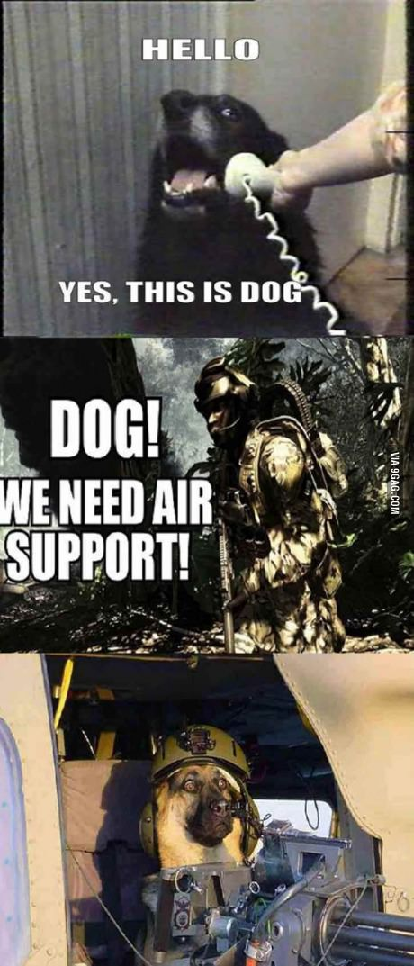 Dog we need air support!