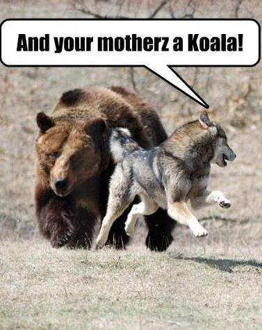 funny-pic-and-your-mother-is-a-koala