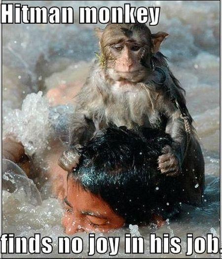 funny-pic-hitman-monkey