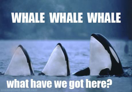 Whale, whale whale.  What have we got here.  LOL.