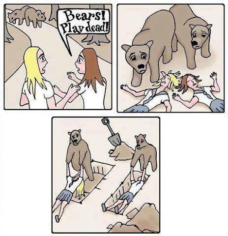 Playing dead with bears
