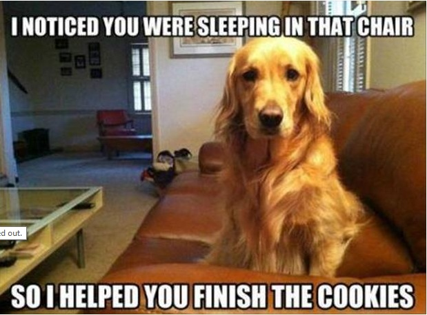 Helpful dog is helpful