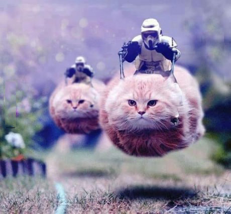 Stormtroopers traveling by cat