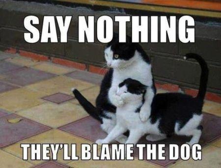 Blame the dog, seems legit