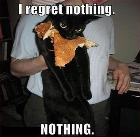 Cat regrets nothing, nothing!