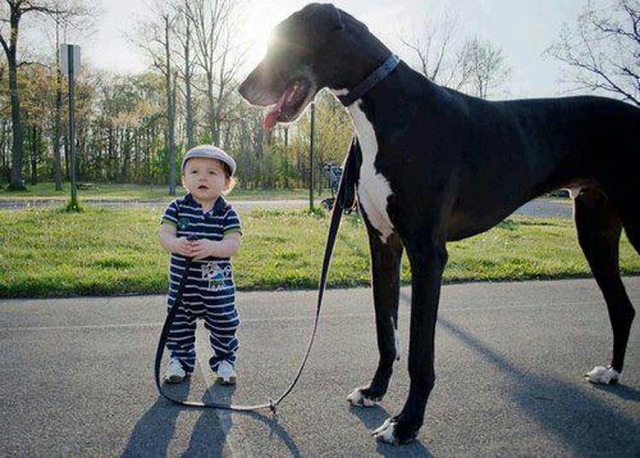 cute-kid-and-dog-12