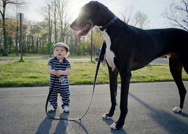 cute-kid-and-dog-12