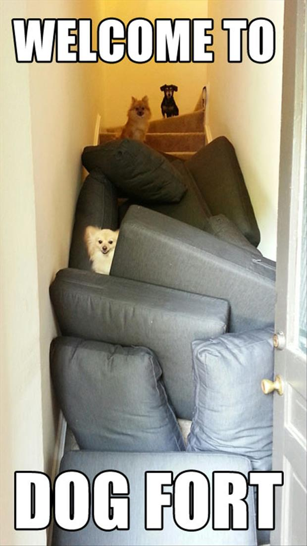 Dog forts, serious business
