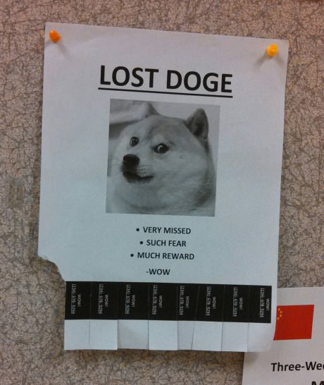 Lost Doge, much fear