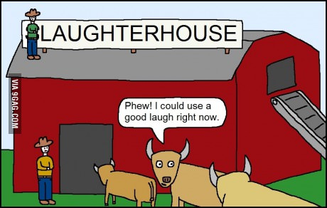 Laughter house, poor cows