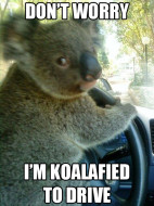 Koalafied, get it?  Hehehe