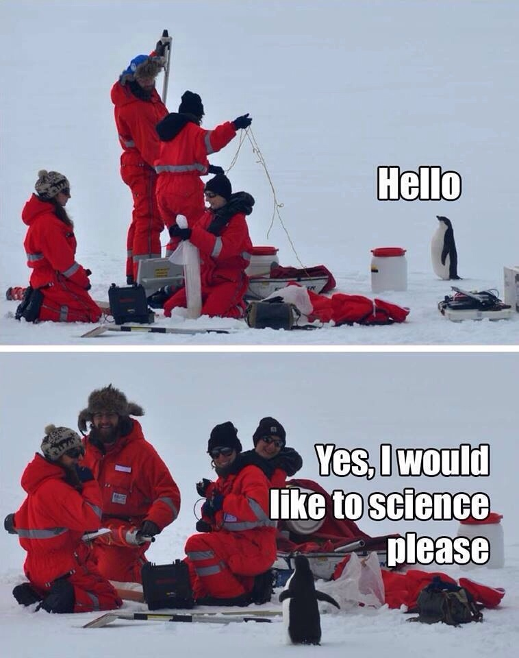Penguins love science after all