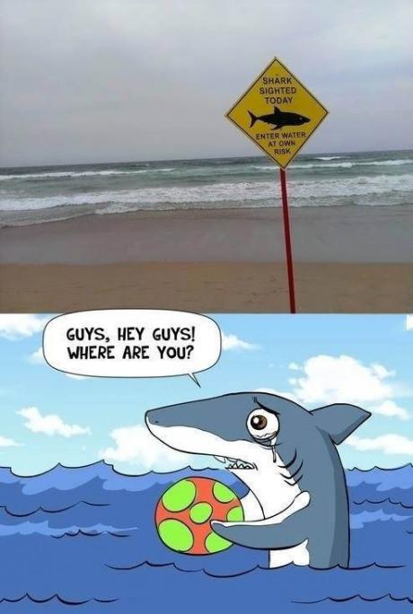 Poor shark :(